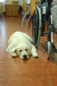 Terapia asistida con animales 2