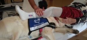 Terapia asistida animales 1