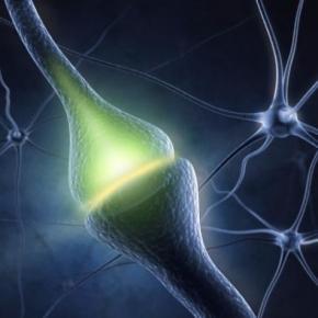 el-procedimiento-de-la-sinapsis_526969.jpg