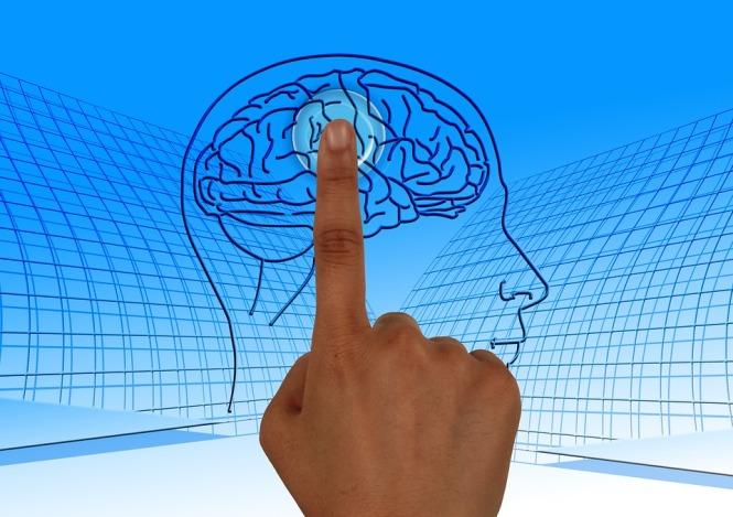 brain-770044_960_720.jpg